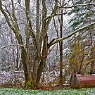 11/10/13 First Snow 1 by Carolyn Clark