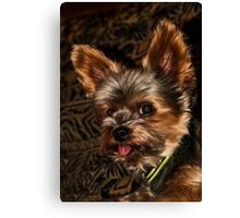 Oh Henry! Canvas Print