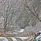 11/10/13 First Snow 2 by Carolyn Clark