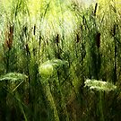 Cattails And Queen Anne's Lace by Marie Van Schie