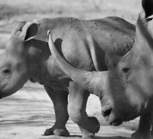 Africa's Big 5 in black and white by Michelle Sole
