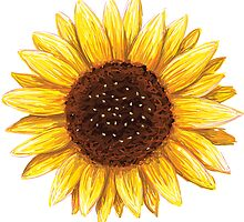 Sunflower sticker by Mhea