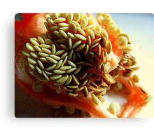 Red Bell Pepper Seeds Canvas Print