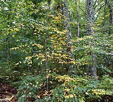 backyard trees by KSKphotography