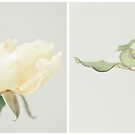 2014 Cover Diptych by Lisa  Epp