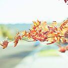 2014 September by Lisa  Epp