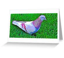 PIGEON---(  In memory of Arrow--) Greeting Card