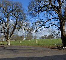 Tree view Glasserton Church carpark by sarnia2