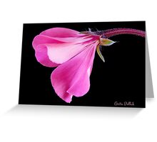 Pink Geranium Greeting Card
