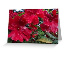 Raindrops on the Red Blooms Greeting Card
