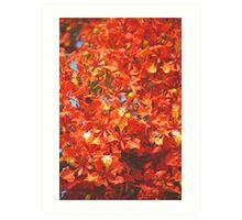 Delonix 15 Art Print