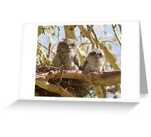 First Day On The Big Branch  Baby Tawny Frogmouth  Greeting Card