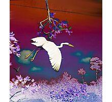 Flying Crane Photographic Print