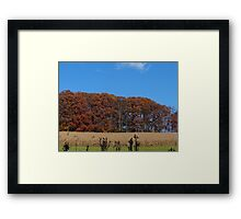 The field of trees Framed Print