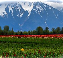 Mountain View Over A Field Of Tulips by Jordan Blackstone