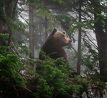 Bear in the Mist by antonium