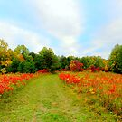 The Trail with the Sumac Blushing Red by TrendleEllwood