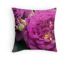 Floribunda Rose 'Ebb Tide' Throw Pillow