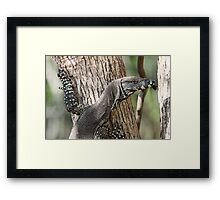 Lace Monitor Framed Print