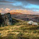 Kingdom of the Sheep by Mari  Wirta