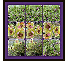 gardener diary Photographic Print