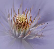 Misty Lilac Clematis by edesigns14