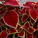 coleus by lensbaby