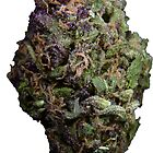 Purple Bud #1 by sensameleon