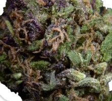 Purple Bud #1 Sticker