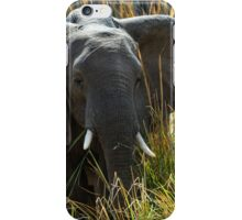 Zambia Elephant iPhone Case/Skin