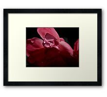 PETALS AND WATER DROPLETS Framed Print