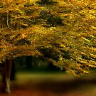 ethereal autumn by Teresa Pople
