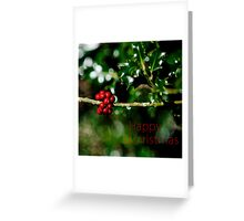 Christmas Card - Holly Greeting Card