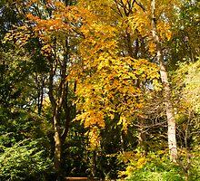 The Tiergarten in Autumn by BerlinSpotting