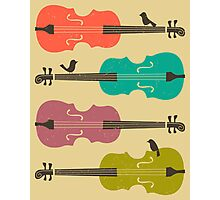 BIRDS ON A CELLO STRING Photographic Print