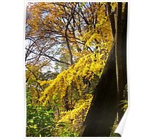 Autumn Cascade, Central Park Poster