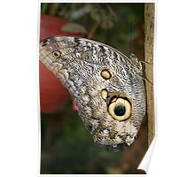 Large Butterfly on a Branch Poster