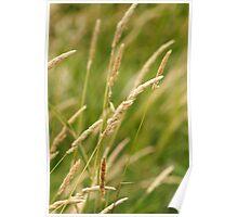 Tall Grass Prairie Poster
