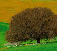 mother tree by jhawa