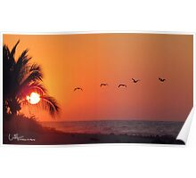 Sunset with pelicans, Manzanillo Bay  Mexico Poster