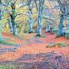 beech wood by Jennifer J Watson