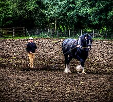 Horse and Spike Harrow by Andrew Pounder