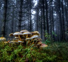 The Rat Pack ~ Wild Mushrooms ~ by Charles & Patricia   Harkins ~ Picture Oregon
