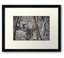 First Snow Doe Framed Print