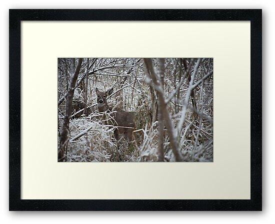 First Snow Doe by Thomas Murphy
