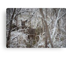 First Snow Doe Metal Print