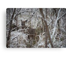 First Snow Doe Canvas Print