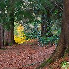 Scottish Forrest Walk by JASPERIMAGE