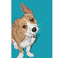 Digby is a Darling Photographic Print