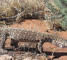 Varanus gigantus_Alice Springs_NT by tiliqua